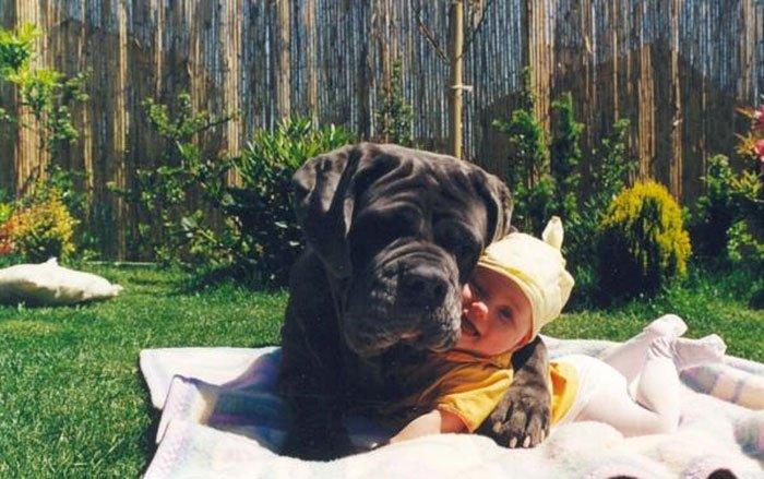 perros-grandes-bebes3