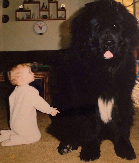 perros-grandes-bebes4