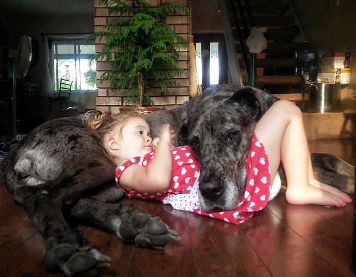 perros-grandes-bebes5