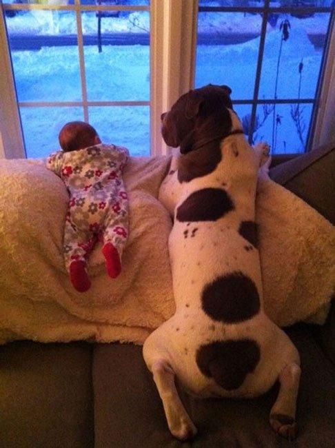 perros-grandes-bebes7