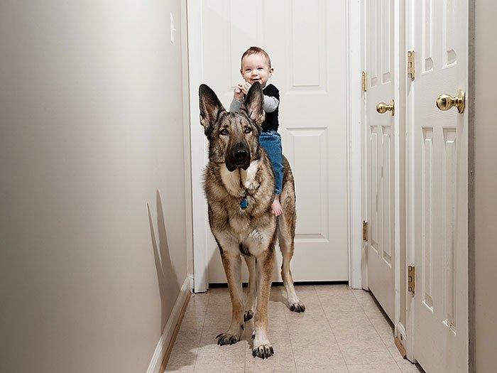 perros-grandes-bebes8