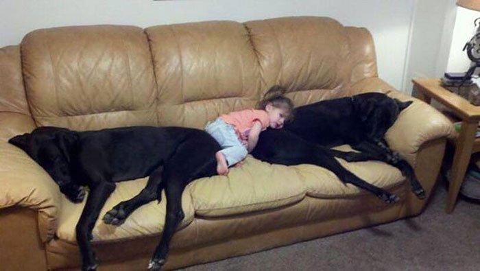 perros-grandes-bebes9