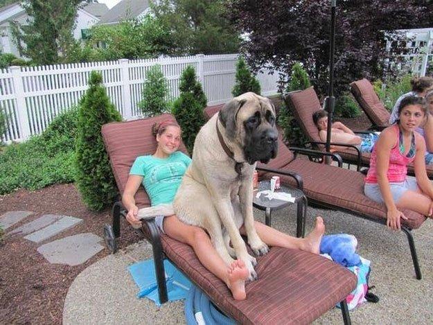 perros-grandes1