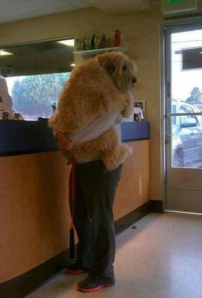 perros-grandes13