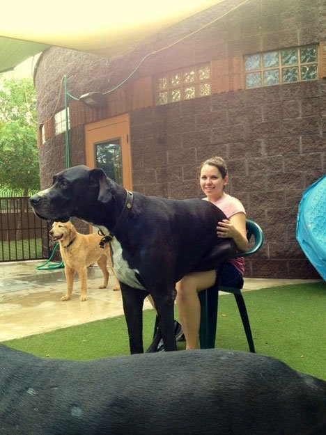 perros-grandes17