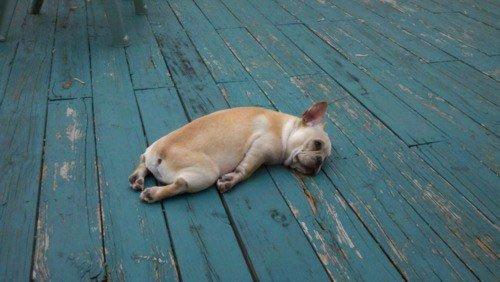 perros-muy-cansados1