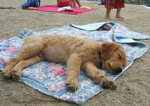 perros-muy-cansados10