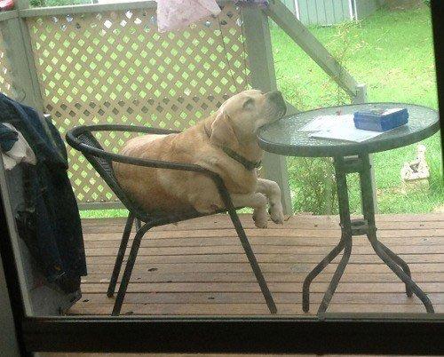 perros-muy-cansados14