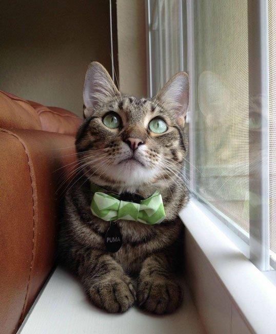 gatos-corbata10