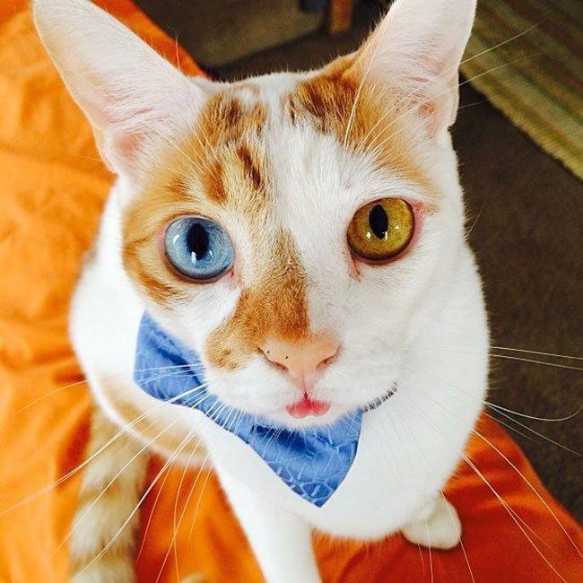 gatos-corbata11