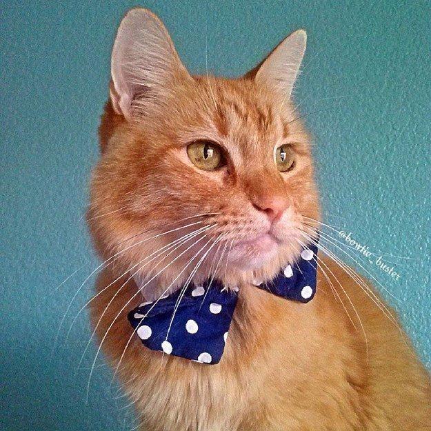 gatos-corbata12