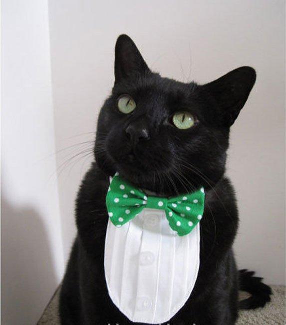 gatos-corbata13