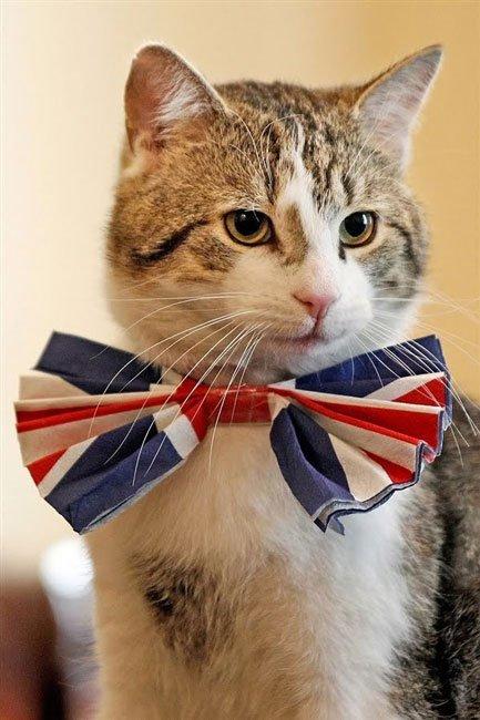 gatos-corbata14