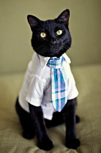 gatos-corbata15