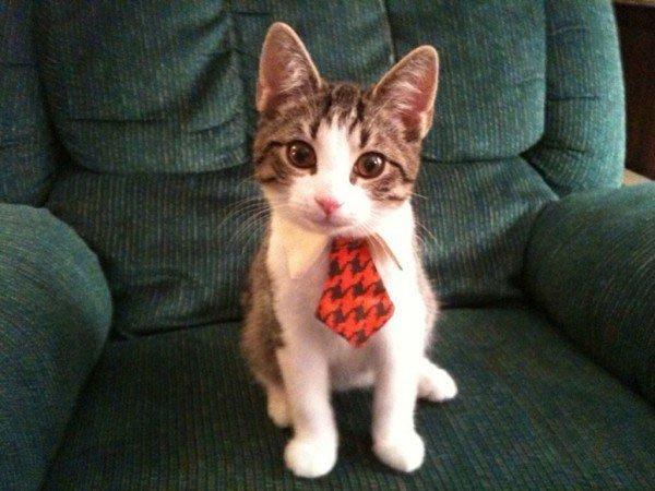 gatos-corbata2