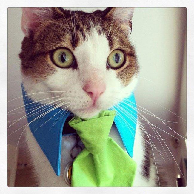 gatos-corbata3
