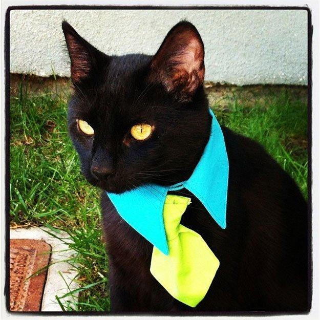 gatos-corbata4