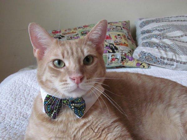 gatos-corbata6