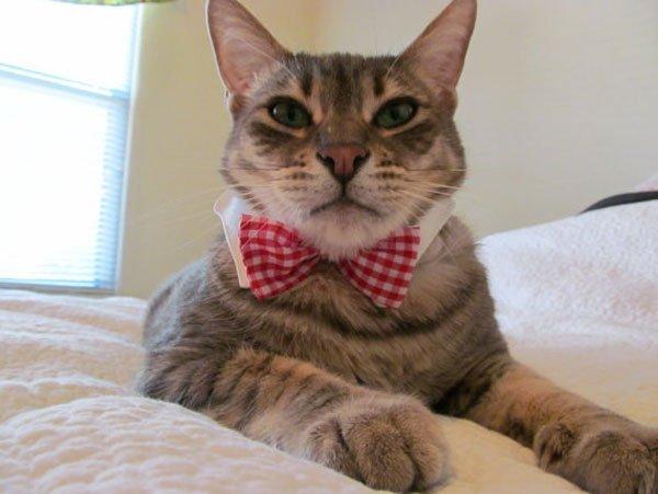 gatos-corbata7