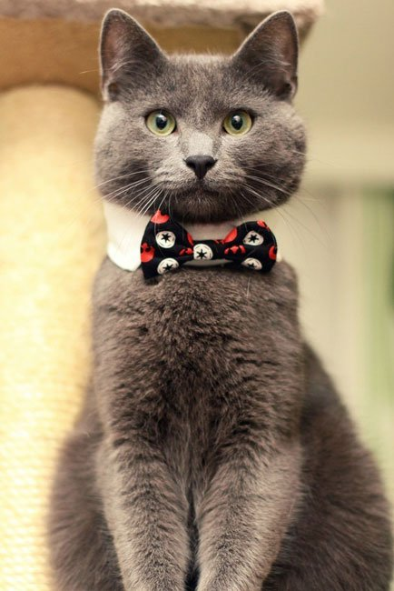 gatos-corbata8
