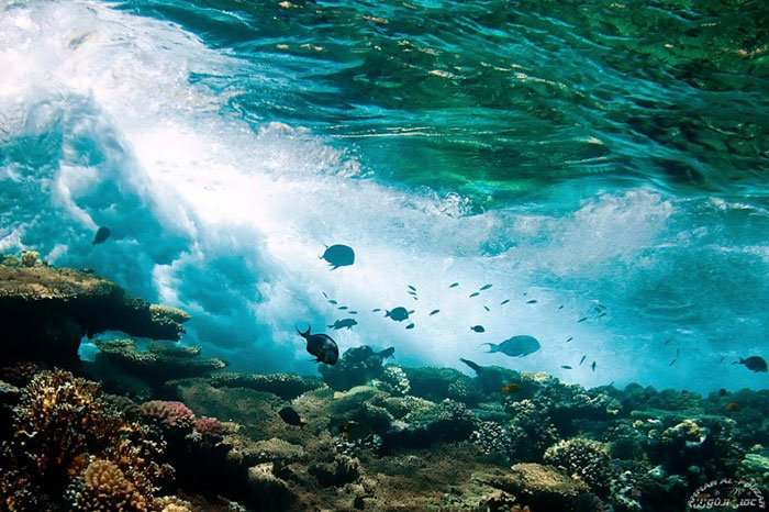 nadar-aguas-cristalinas27