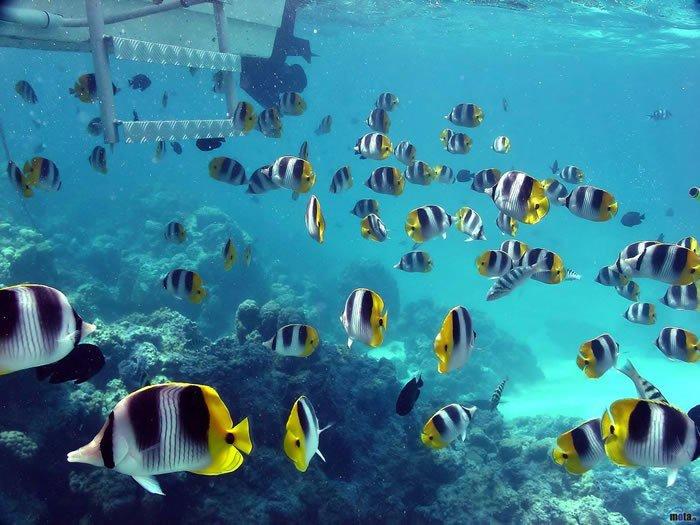 nadar-aguas-cristalinas30