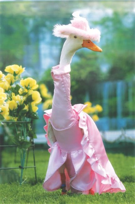 patos-elegantes8