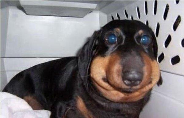 perros-abejas11