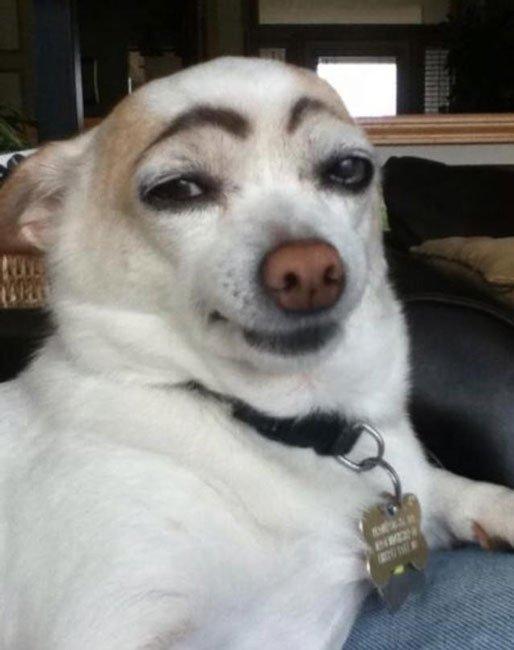 perros-cejas1