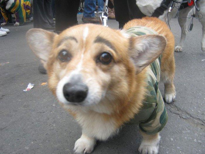 perros-cejas12