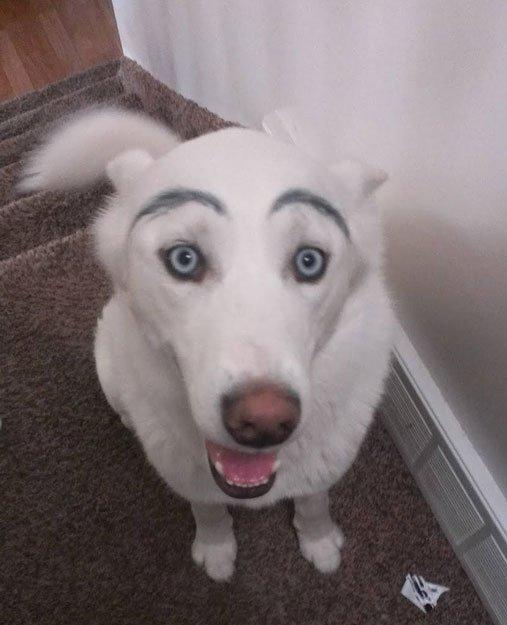 perros-cejas22