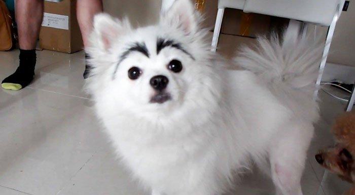 perros-cejas9