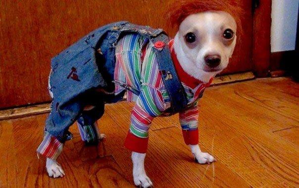 perros-disfrazados10