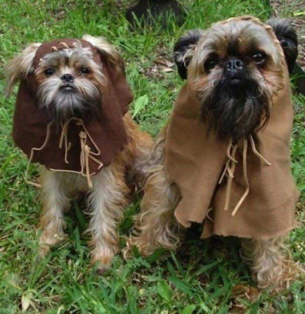 perros-disfrazados13