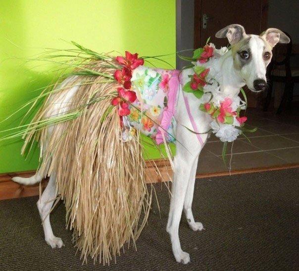 perros-disfrazados14