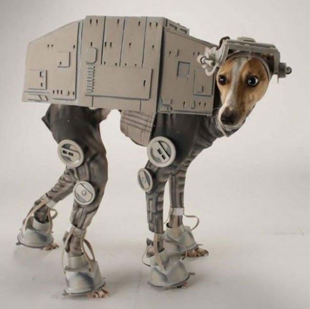 perros-disfrazados18