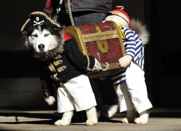 perros-disfrazados19