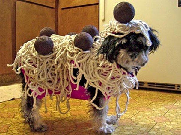 perros-disfrazados21