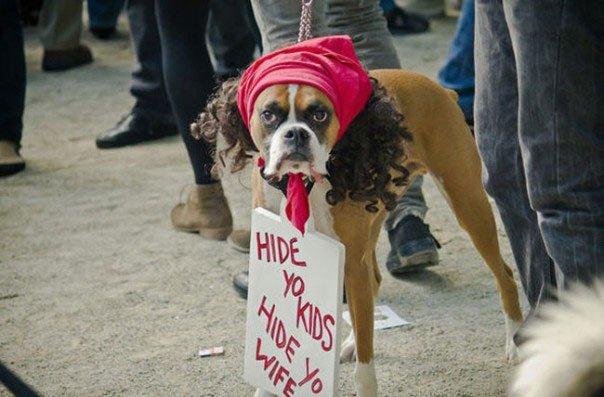 perros-disfrazados22