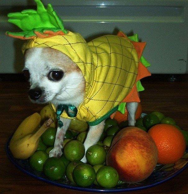 perros-disfrazados3