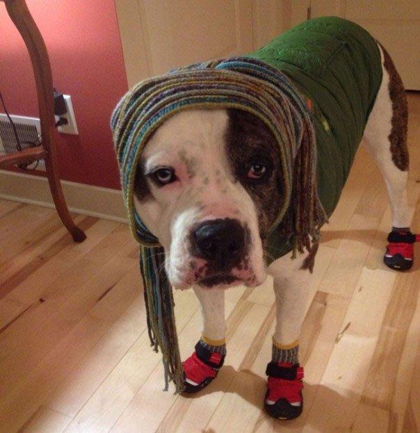 perros-disfrazados5
