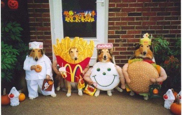 perros-disfrazados7