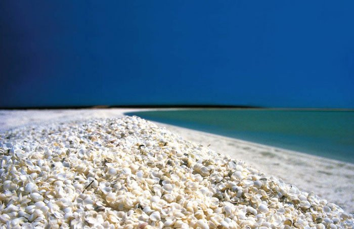 playas-conchas7