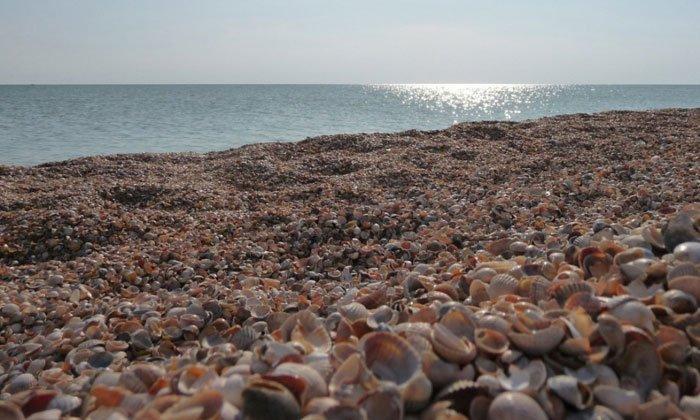playas-conchas9