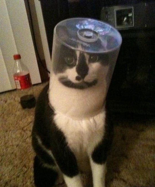 gato-problemas1