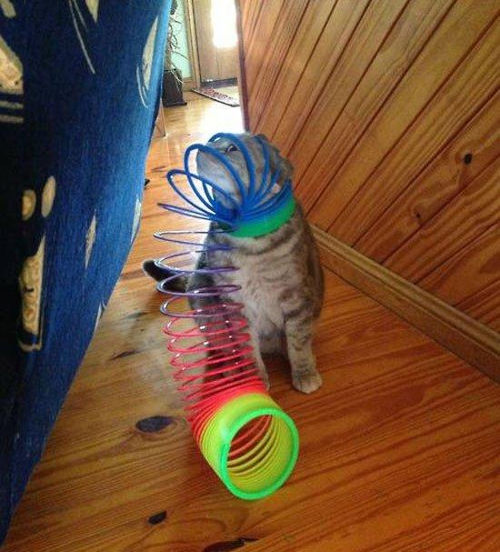 gato-problemas13