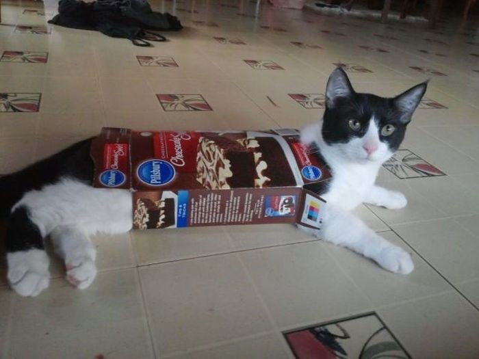 gato-problemas14