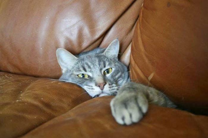 gato-problemas15