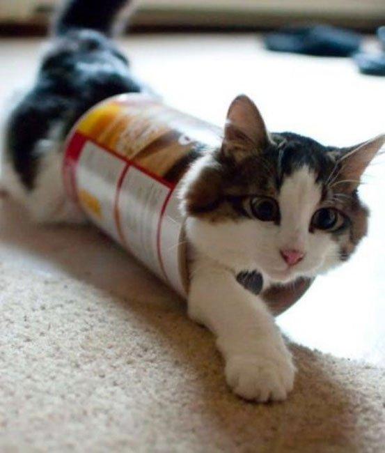 gato-problemas16