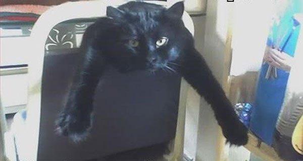gato-problemas19